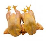 Pollo casero